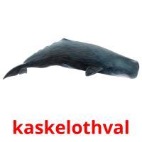 kaskelothval picture flashcards