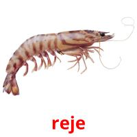 reje picture flashcards
