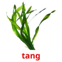 tang picture flashcards