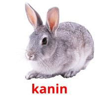 kanin picture flashcards