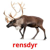 rensdyr picture flashcards