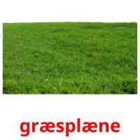 græsplæne picture flashcards