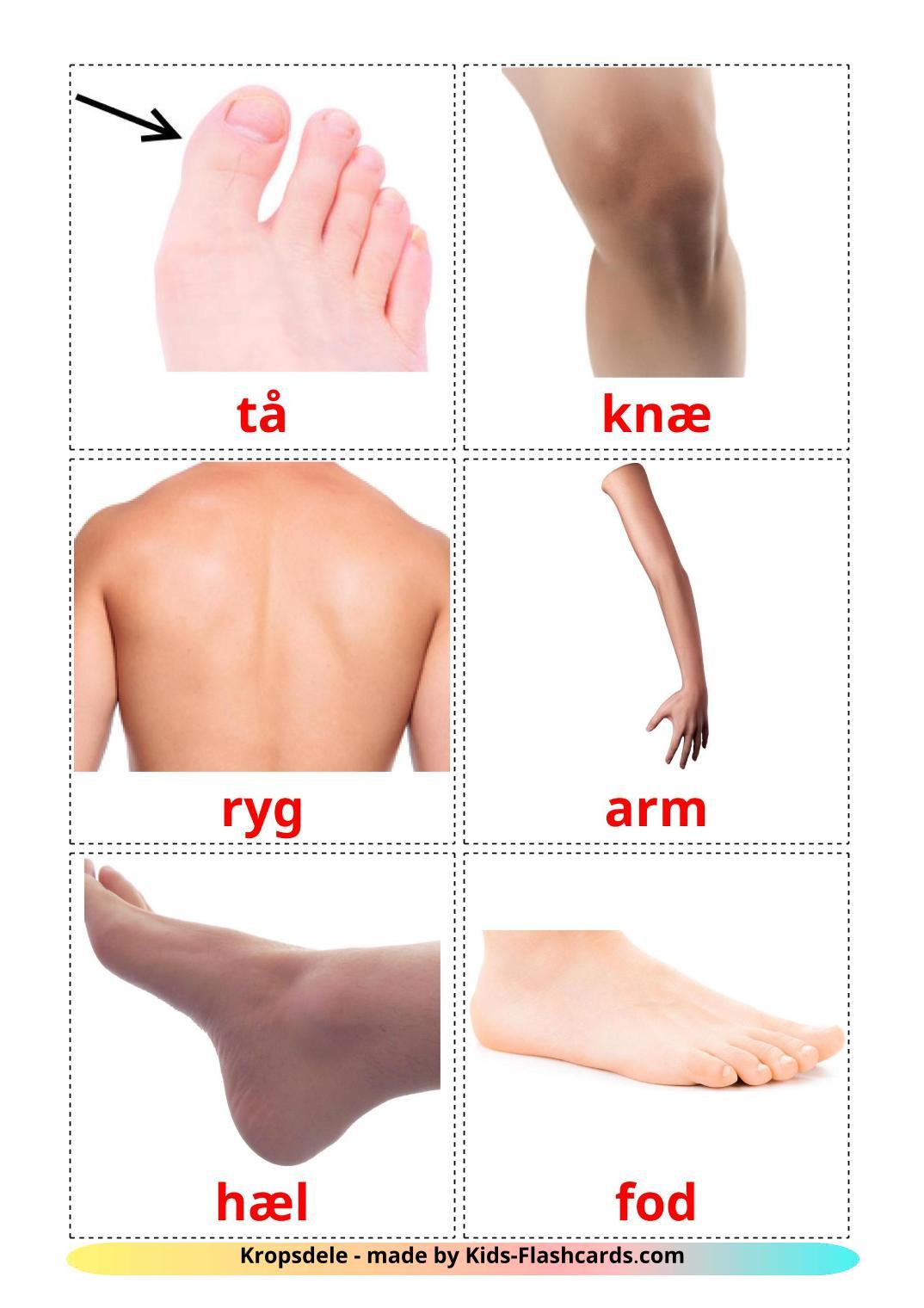 Body Parts - 26 Free Printable dansk Flashcards