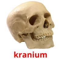 kranium picture flashcards