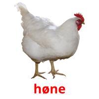 høne picture flashcards