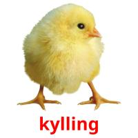 kylling picture flashcards