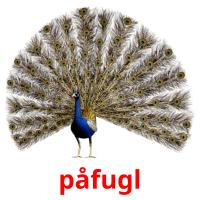 påfugl picture flashcards