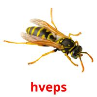 hveps picture flashcards