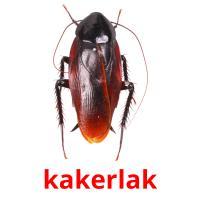 kakerlak picture flashcards