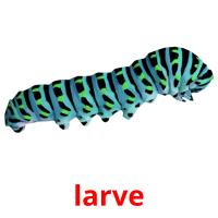 larve picture flashcards
