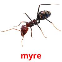 myre picture flashcards