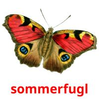sommerfugl picture flashcards