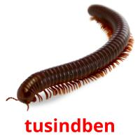 tusindben picture flashcards