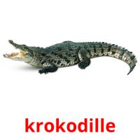 krokodille picture flashcards