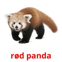 rød panda picture flashcards