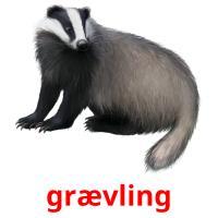 grævling picture flashcards