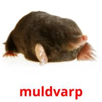 muldvarp picture flashcards