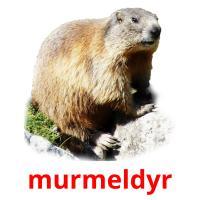 murmeldyr picture flashcards