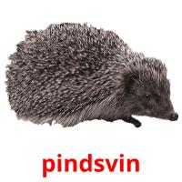 pindsvin picture flashcards