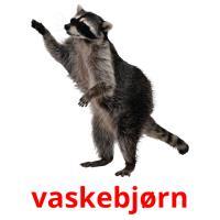 vaskebjørn picture flashcards