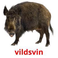 vildsvin picture flashcards