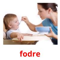 fodre picture flashcards
