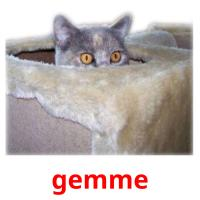 gemme picture flashcards