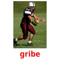gribe picture flashcards