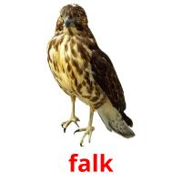 falk picture flashcards