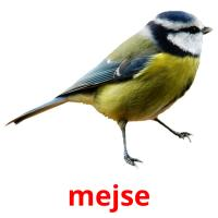 mejse picture flashcards