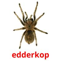 edderkop picture flashcards