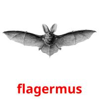 flagermus picture flashcards