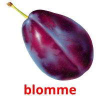 blomme picture flashcards