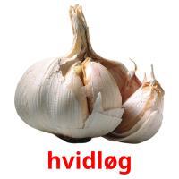 hvidløg picture flashcards