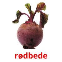 rødbede picture flashcards