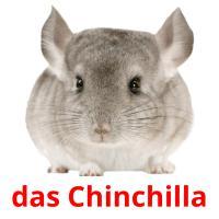 das Chinchilla picture flashcards