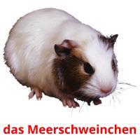 das Meerschweinchen picture flashcards