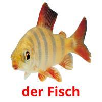 der Fisch picture flashcards