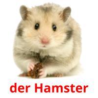 der Hamster picture flashcards