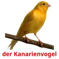 der Kanarienvogel picture flashcards