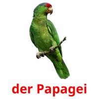 der Papagei picture flashcards