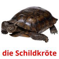 die Schildkröte picture flashcards