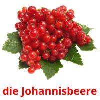 die Johannisbeere picture flashcards