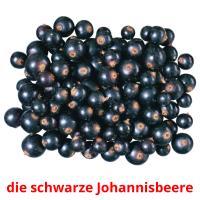 die schwarze Johannisbeere picture flashcards