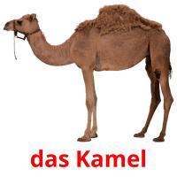das Kamel picture flashcards