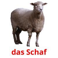 das Schaf picture flashcards