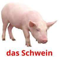 das Schwein picture flashcards