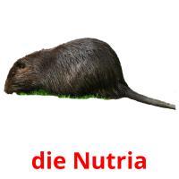 die Nutria picture flashcards