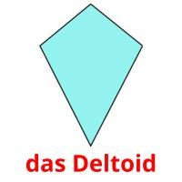 das Deltoid picture flashcards