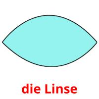 die Linse picture flashcards